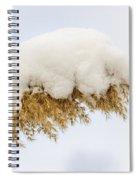 Winter Reed Under Snow Spiral Notebook
