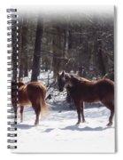 Winter Shadow Horses Spiral Notebook