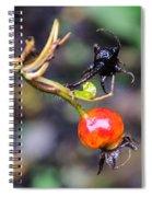 Winter Signal Rose Hip Spiral Notebook