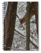 Winter Squirrel Spiral Notebook