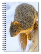Winter Squirrel Spiral Notebook