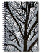Winter Tree 1 Spiral Notebook