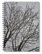 Winter Tree 6 Spiral Notebook