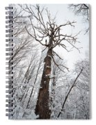 Winter Tree Perspective Spiral Notebook