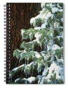 Winter Tree Sierra Nevada Mts Ca Usa Spiral Notebook