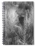 Winter Trees  B And W 1 Spiral Notebook