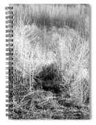 Winter Trees B And W 3 Spiral Notebook