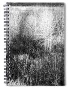Winter Trees B And W 5 Spiral Notebook