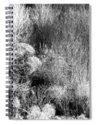 Winter Trees B And W 6 Spiral Notebook