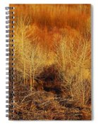 Winter Trees Color 3 Spiral Notebook