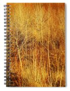 Winter Trees Color 4 Spiral Notebook