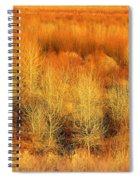 Winter Trees Color  7 Spiral Notebook