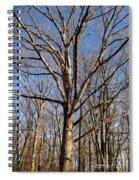 Winter White Oak Spiral Notebook