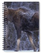 Winters Chill Spiral Notebook