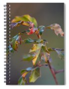 Winter's Oak Sapling Spiral Notebook