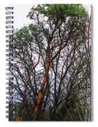 Winters Trees  Spiral Notebook