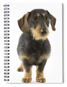 Wire-haired Dachshund Spiral Notebook
