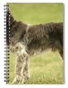 Wirehaired Pointing Griffon Spiral Notebook
