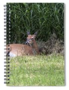 Wisconsin Doe Resting Spiral Notebook