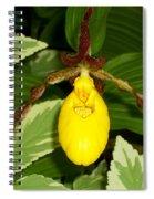 Wisconsin Yellow Lady Slipper Spiral Notebook
