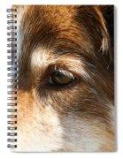 Wise Old Collie Eyes Spiral Notebook