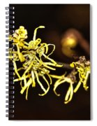 Witch-hazel- Hamamelis - Woodland Shrub Spiral Notebook