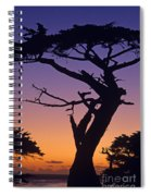 Witch Tree Monterey California Spiral Notebook
