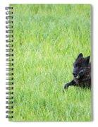 Wolf 889f Spiral Notebook