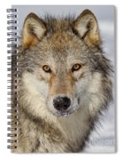 Wolf Face To Face Spiral Notebook