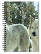 Wolf Gaze Spiral Notebook