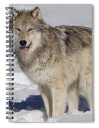Wolf In Snow Spiral Notebook
