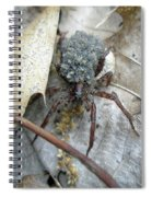 Wolf Spider And Spiderlings Spiral Notebook
