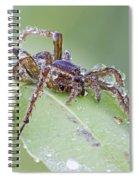 Wolf Spider In Dew  Spiral Notebook