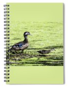 Wood Duck And Baby Spiral Notebook
