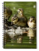 Wood Duck Babies Spiral Notebook