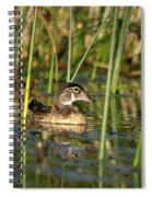 Wood Duck Drake Spiral Notebook