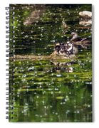 Wood Duck Family Spiral Notebook