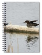 Wood Duck Females On A Log  Spiral Notebook