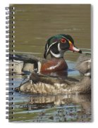 Wood Duck Pair Dwf088 Spiral Notebook