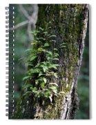 Wood Flora 2013 Spiral Notebook