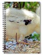 Wood Stork Mycteria Americana Spiral Notebook