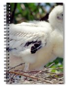 Wood Stork Nestling Spiral Notebook