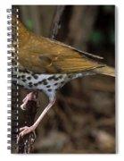 Wood Thrush Spiral Notebook