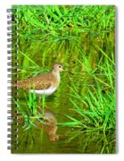 Solitary Sandpiper Spiral Notebook