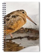 Woodcock In Winter Spiral Notebook