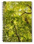 Woodland Background 02 Spiral Notebook