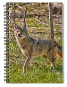 Woodland Coyote Spiral Notebook