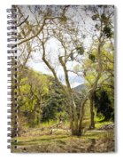 Woodland Glen In The California Vallecito Mountains Spiral Notebook