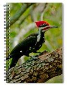 Woodpecker On A Limb Spiral Notebook