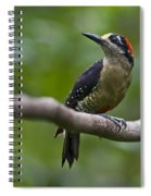 Woody Woodpecker.. Spiral Notebook